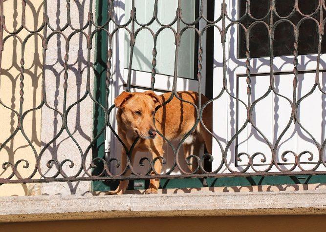 il cane può saltare dal balcone?