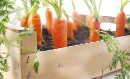 carote sul balcone