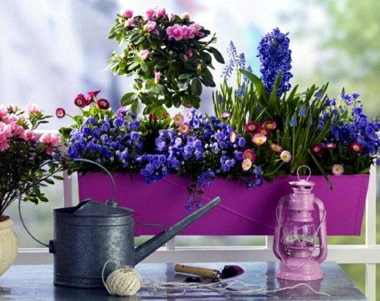 Abbellire il terrazzo con piante e fiori