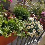 Fioriera da balcone e terrazzo