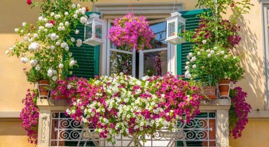 Piante e fiori in balcone