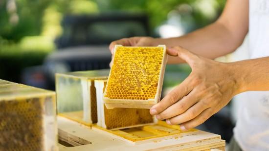 miele con arnia domestica