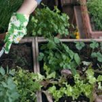 Cosa piantare nell'orto sul balcone