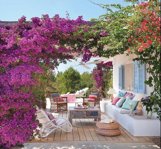 piante per fare ombra in terrazzo