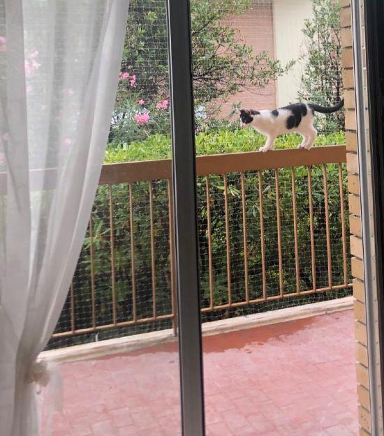 Protezione gatto per balcone